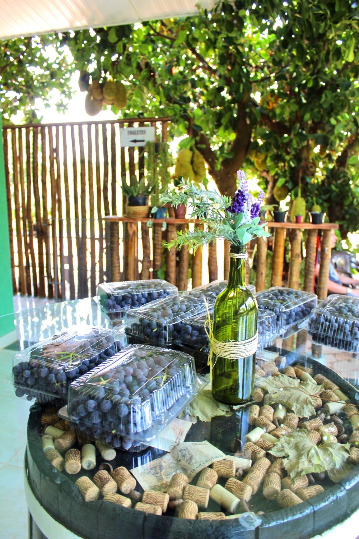visita vinicola goias