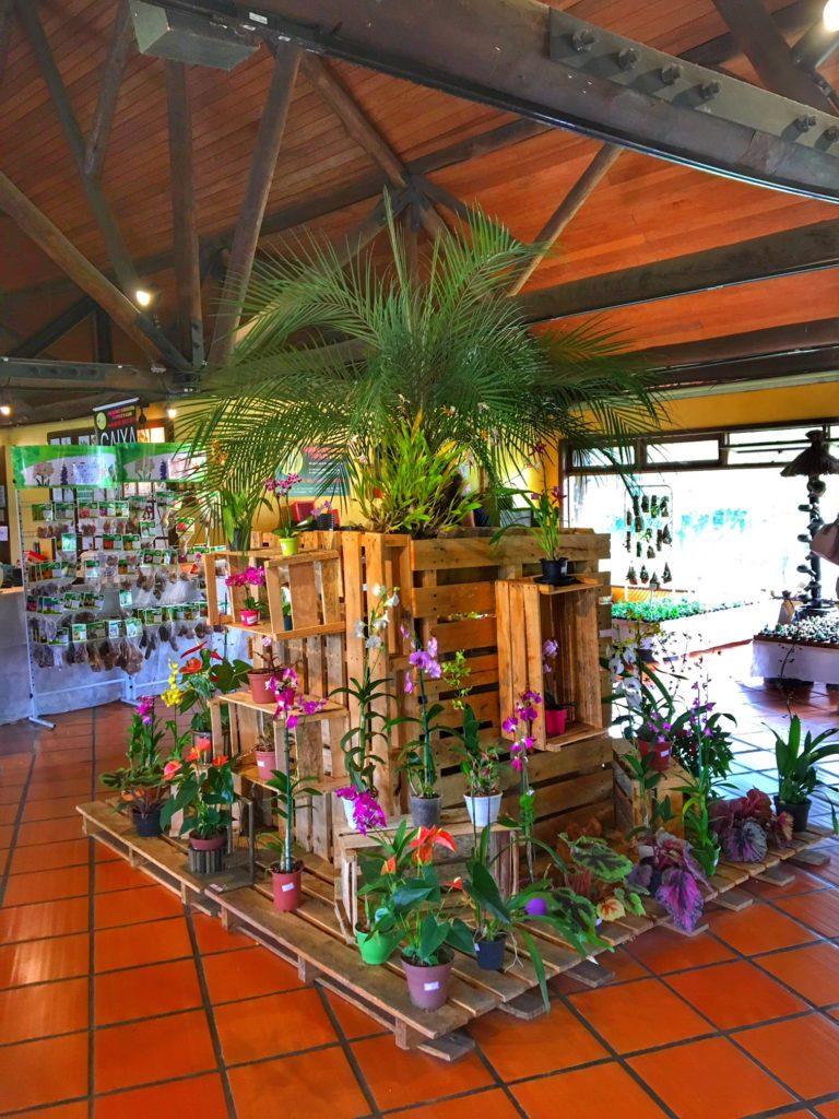 conhecendo o jardim botanico de curitiba