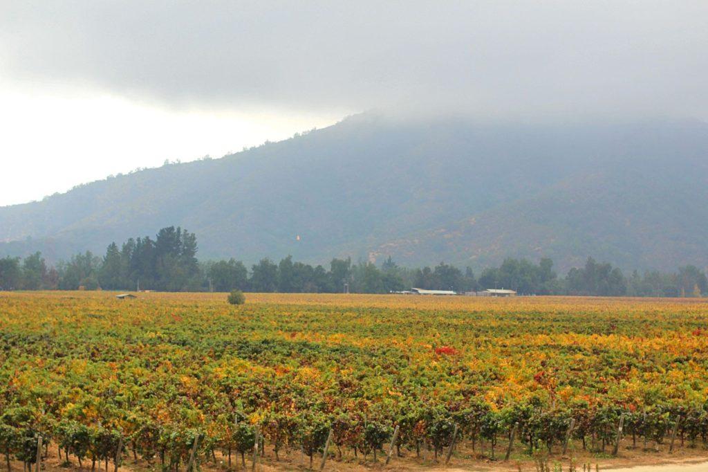 tour vinicola veramonte valle de Casablanca chile